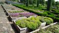 Bylinná zahrada Botanicus