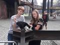 Kočky v DOV