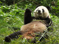 Planeta Země 3000: Čína - říše mocného draka - Panda velká